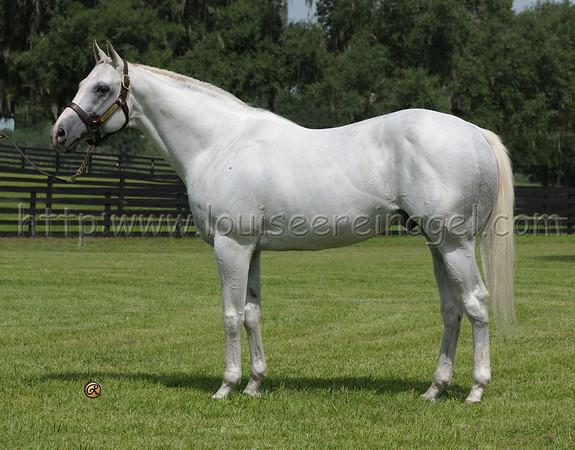 Adena Stallions