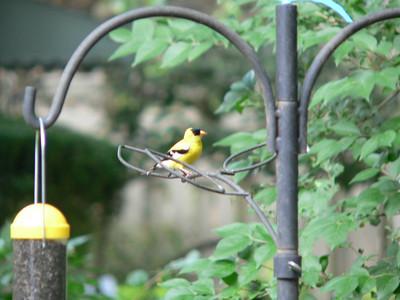 2007 Backyard