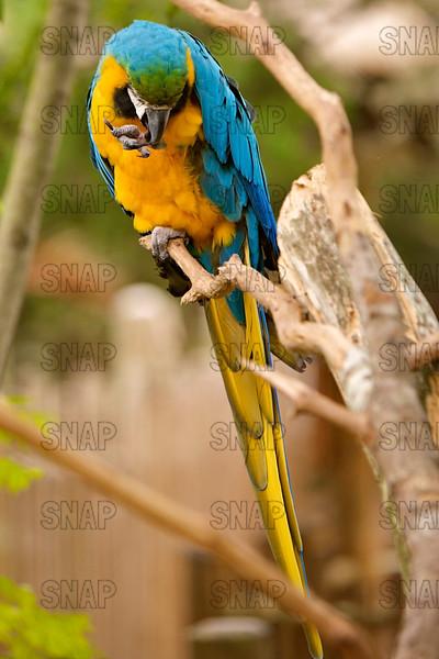 Parrots & Parrot-like Birds