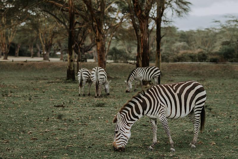 Tu-Nguyen-Destination-Wedding-Photographer-Kenya-Masai-Mara-Elopement-Doris-Sam-52a2.jpg
