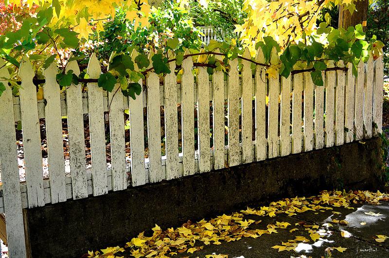 fall walk 10-15-2013.jpg