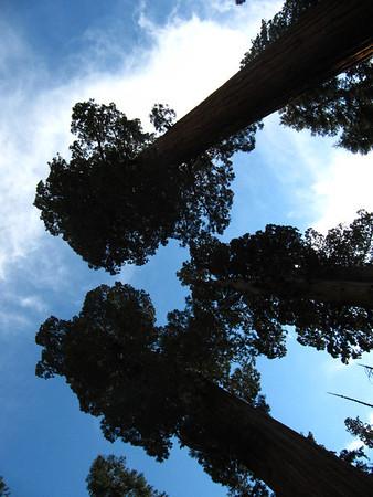 Adela& James' Pre-Nuptuals-Sequoia-9-30-11