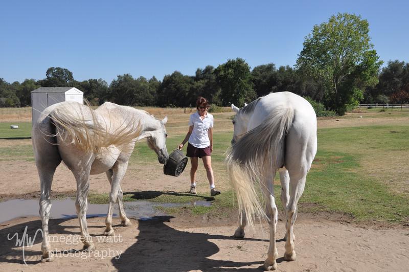 EB&Horses-009.jpg