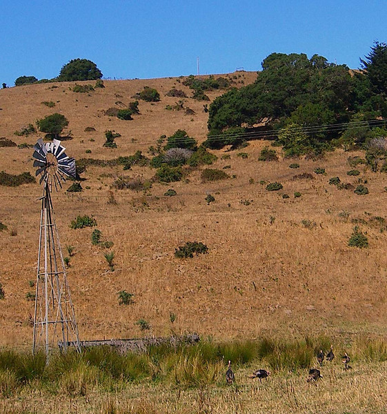 Wild turkeys are in abundance in Marin County, lower right in picture. This is a ranch along Horseshoe Hill in Bolinas.