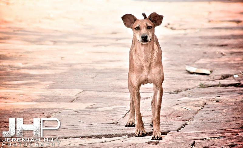 """Meherangarh Dog"", Meherangarh Fort, Jodhpur, Rajasthan, India, 2007 Print IND3920-112"