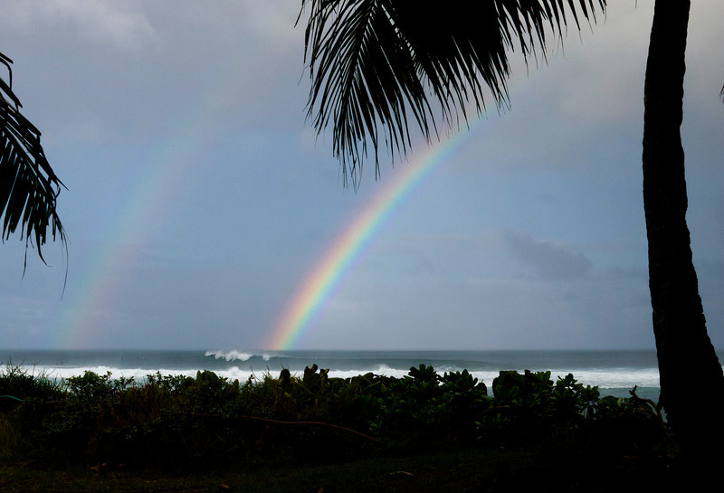 Rainbow with palm fronds  December 10, 2013 8:30am