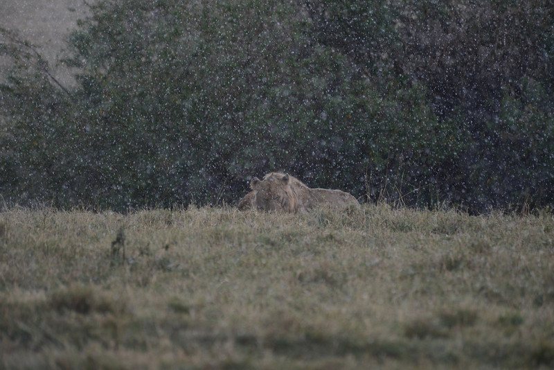 East Africa Safari 442.jpg