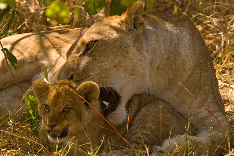 sister and cub3.jpg
