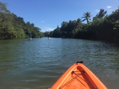 North Shore kayaking!  We went down the Anahulu River, we took a 1 mile paddle up the slow moving river