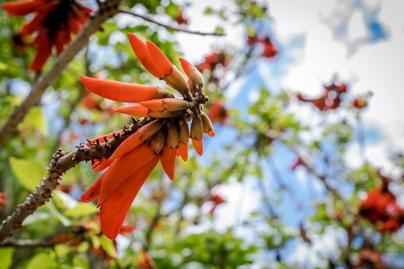 Flora_preview-3.jpg