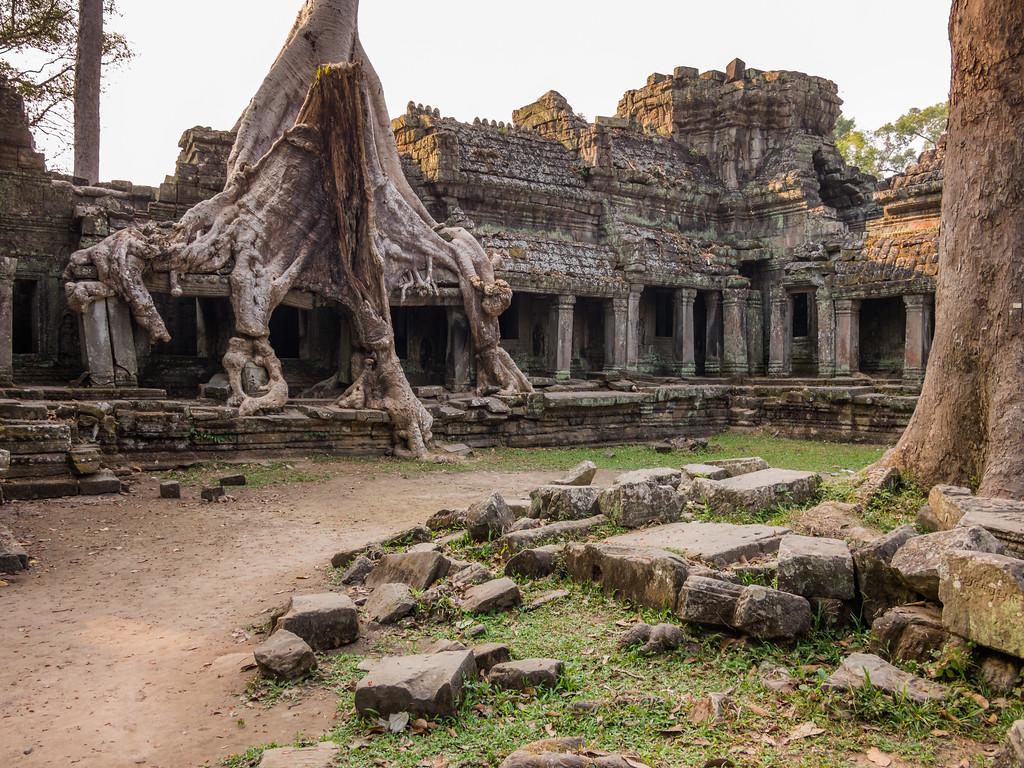 Trees and Stone, Prah Khan, Angkor, Cambodia