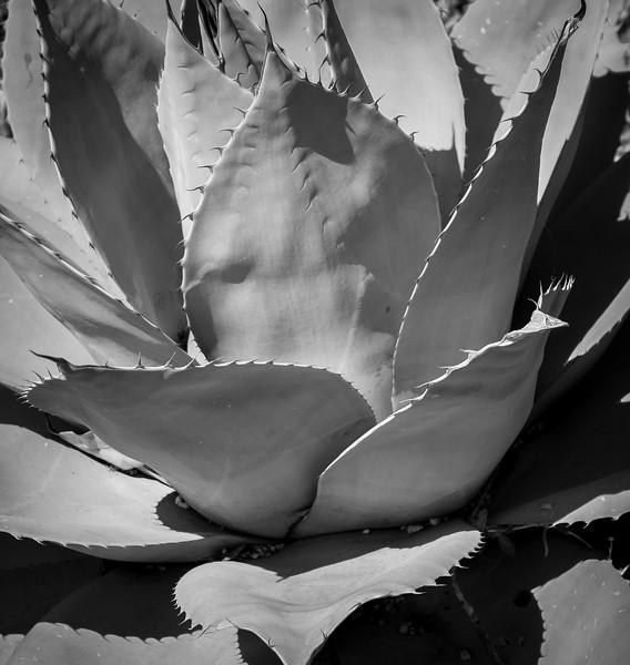 McGovern-Centennial-Gardens-9275.jpg
