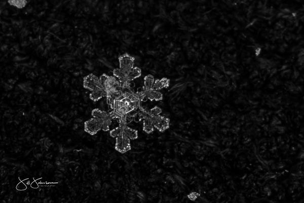 snowflakes-0677.jpg