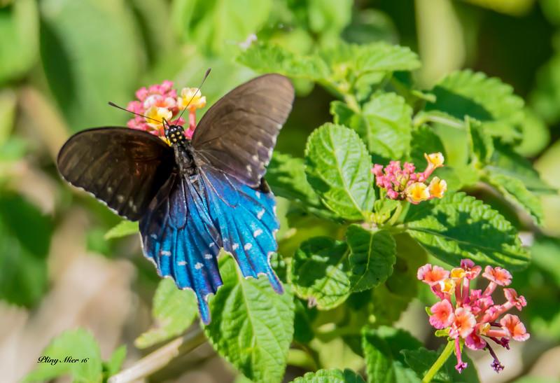 Butterfly 2 DSC_3384.jpg