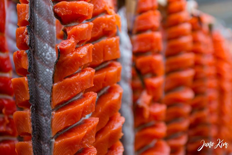 ANHC Fishing Camp-6100248-Juno Kim.jpg