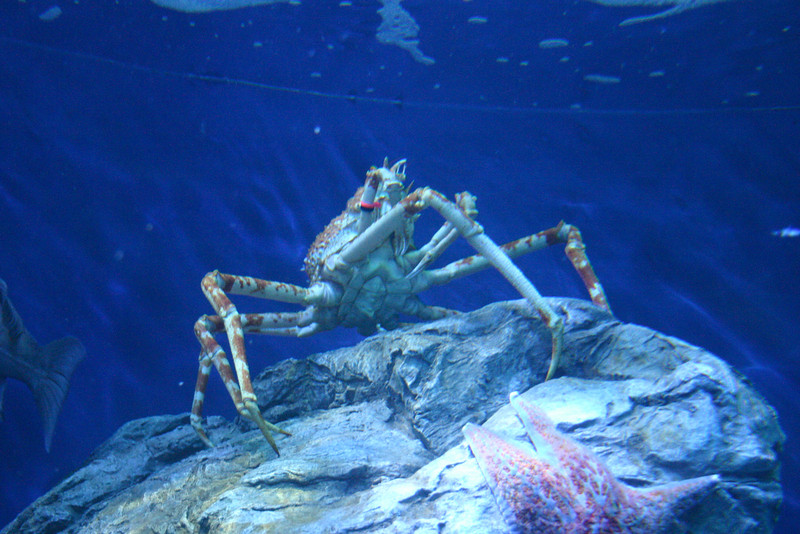 Photo taken at the Aquarium of the Pacific in Long Beach