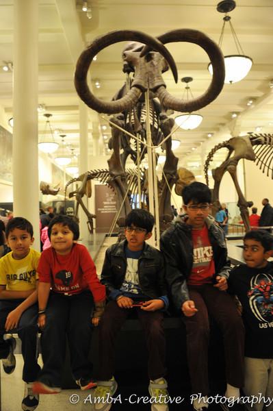 2013-12-30_AMNHMuseum@NewYorkNY_55.jpg
