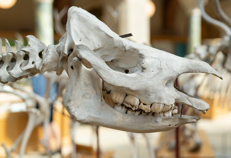 Oxford Natural History Museum (Aug 2021)
