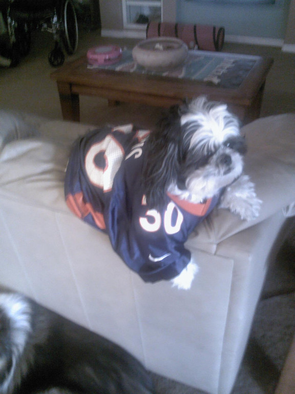 . Romeo is excited for another win......GO BRONCOS!! Rhonda Mayoral