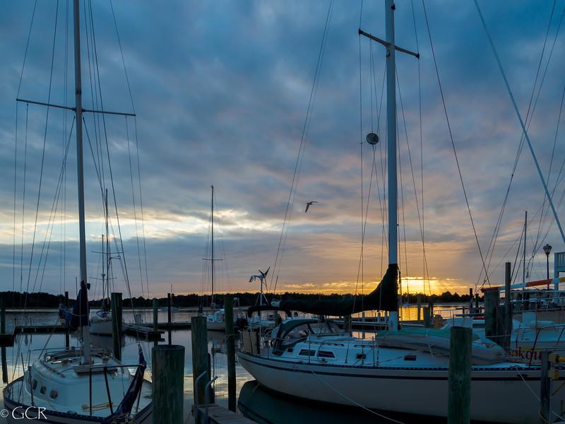 Sunset Gull 2 (1 of 1).jpg