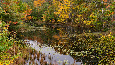 New England (Fall 2018)