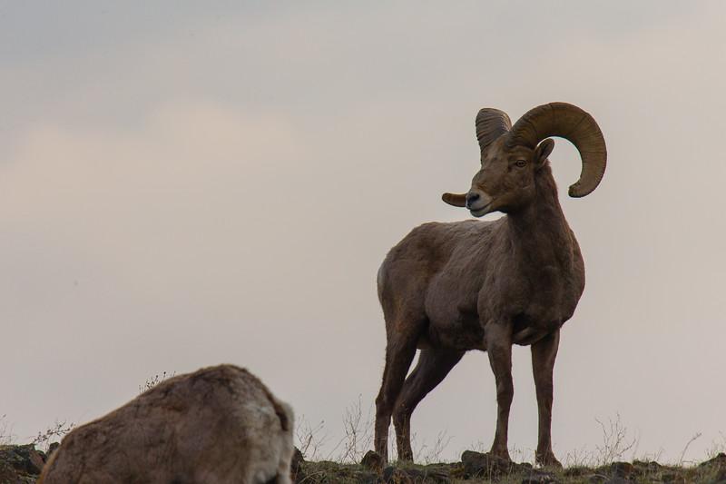 Rams Malaga-56.jpg