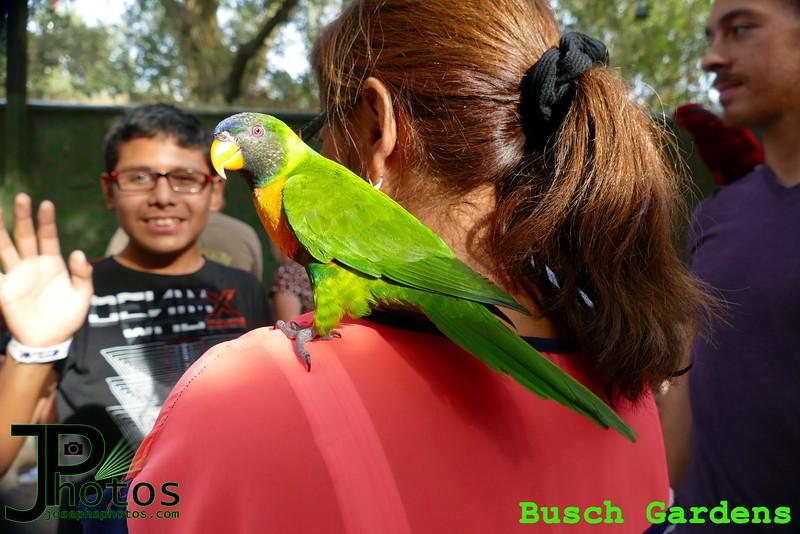 Busch Gardens - 2.jpg