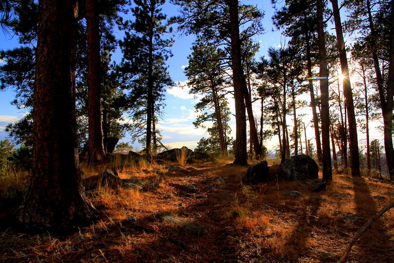 Devils Tower Trail Grass 2.jpg