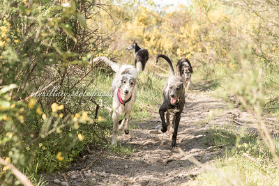 Puppies First Off Leash Romp 2016