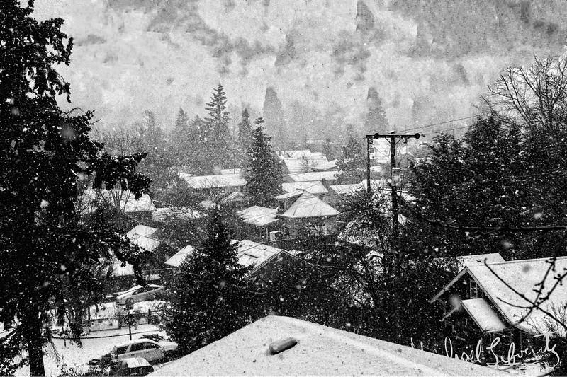 snow fall  EugeneSnowfall026