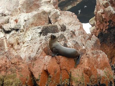 Острова Балестос. Перу