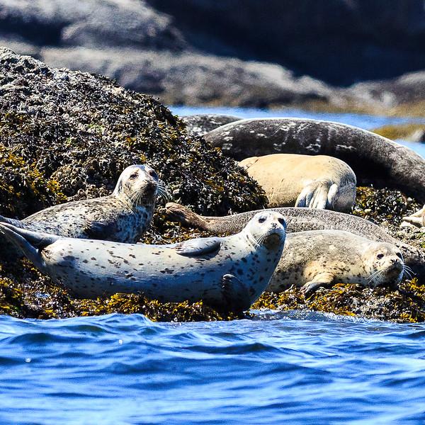 Seals 2-2129.jpg