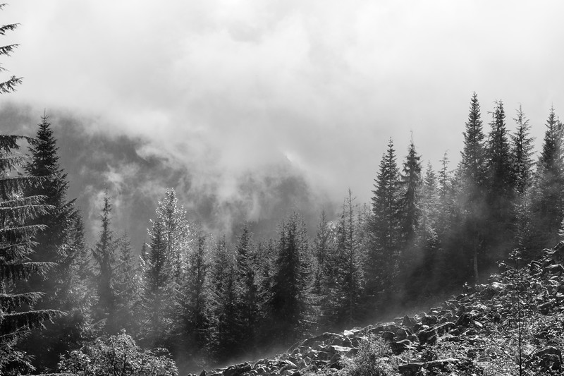 Fog and trees near Whistler, British Columbia.