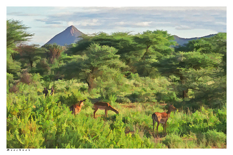 gazellesimplicityparadise.jpg