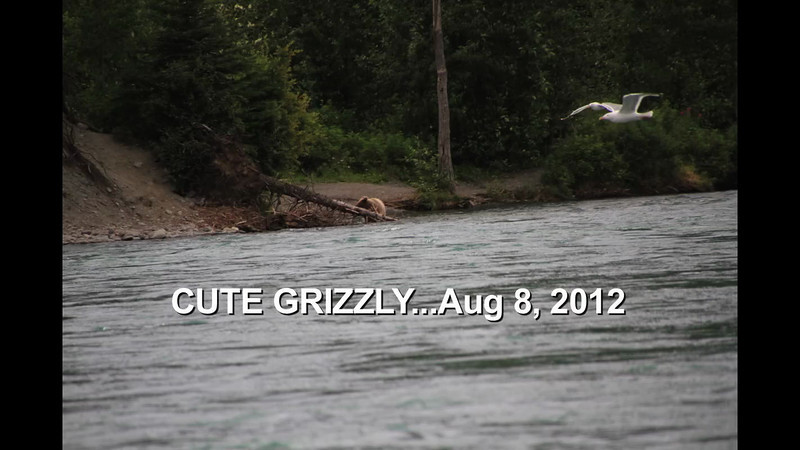 ...Cute Grizzly...