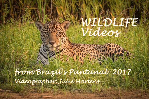 Wildlife of Brazil's Pantanal 2017