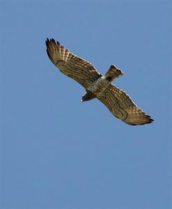 Birds Extremadura