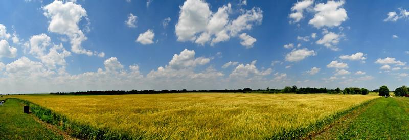 wheatfield_panarama.jpg