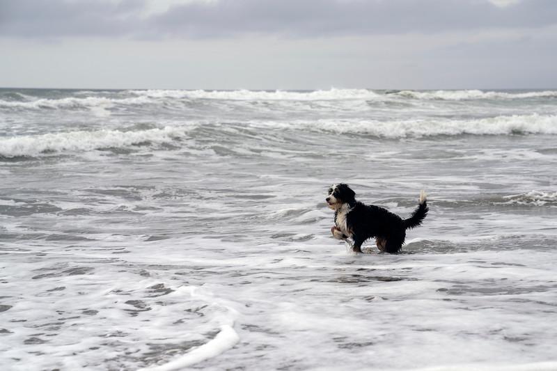ocean beach quarantine 1225965-30-20.jpg