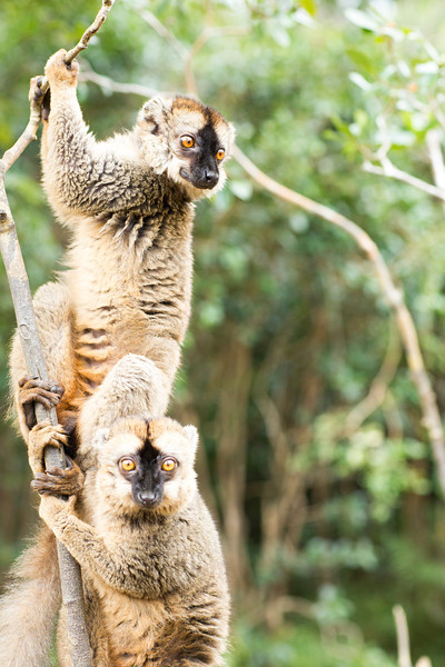 Madagascar_2013_IG3A2430.jpg