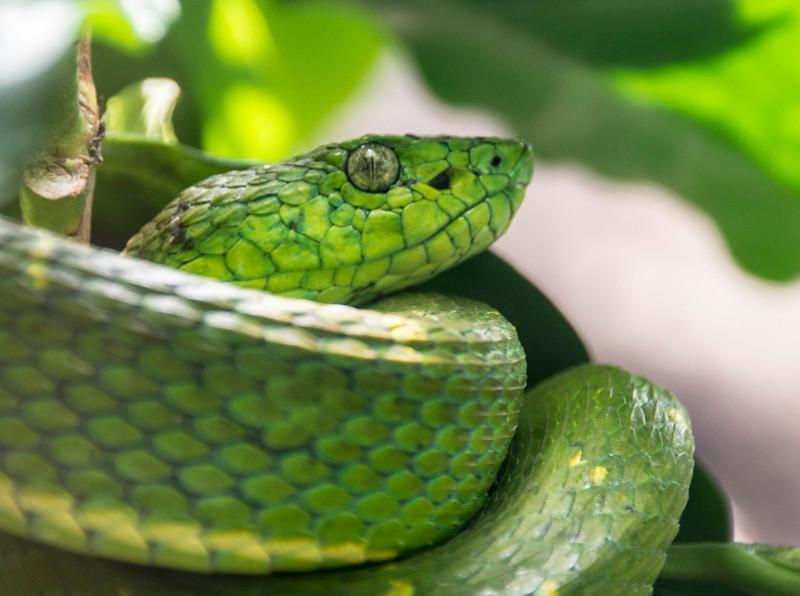 Costa Rica_Reptiles-5.jpg
