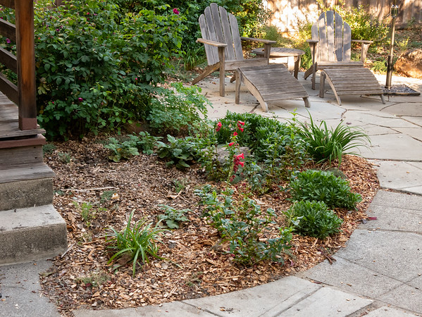 14 October 2017.  Rose Bed, west side.  The Juncus is out.  I relocated the Geums, brought in an Agapanthus from the front (before the redo, it was in the big flower bed here in back), and tucked in a few California poppies.  Eventually a rose will go in the open spot.