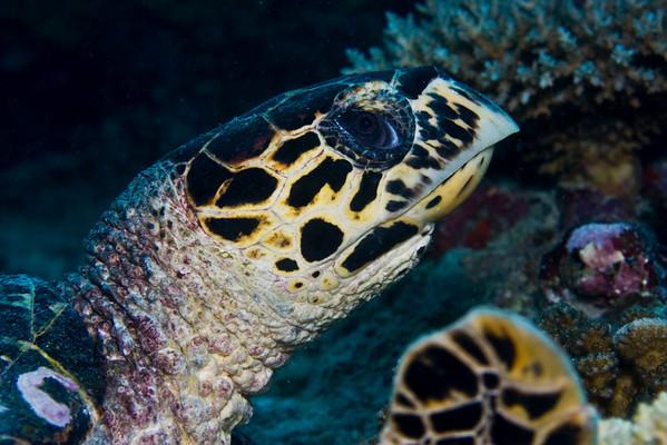 Maldives  II