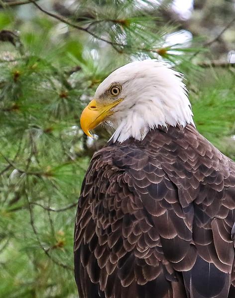 Birds of Northern Wisconsin
