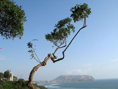 Lima (Oct  2007)