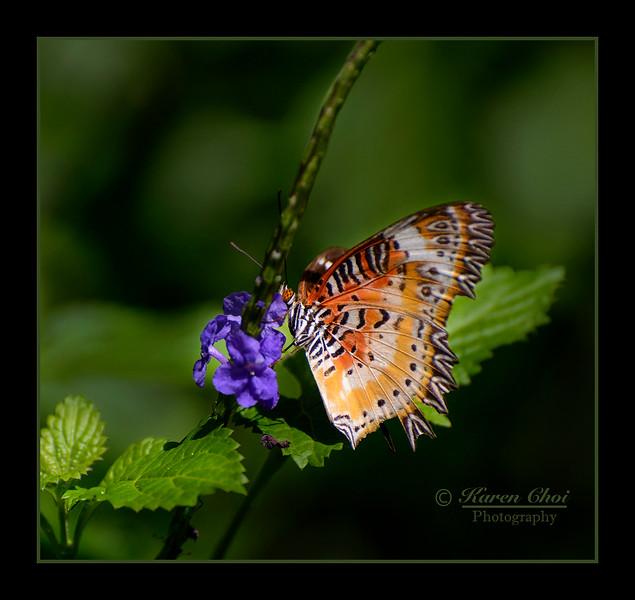 orange butterfly with purple flower sm.jpg