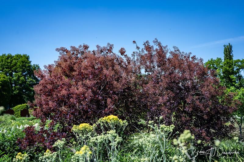 Sussex Prairie Gardens Z6-3764.jpg