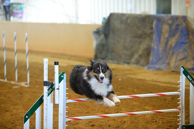JAG AKC Agility Trial November 18-20