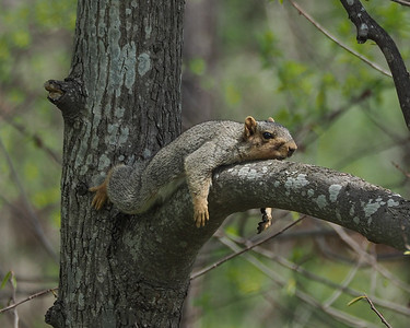 Thompson Wildlife Management Area,