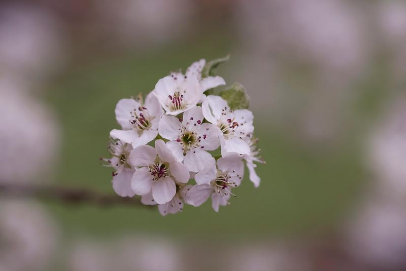 Blooms040218-127.jpg